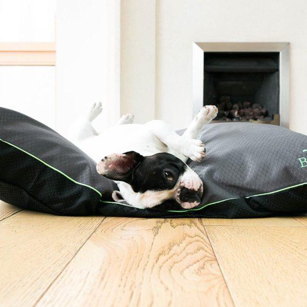 Dog rolling on charcoal cushion