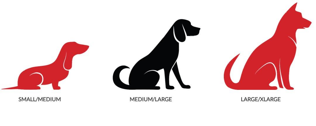 Dog Sizes Blog Image